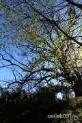 2013_04_16_proljece_u_gradu_spaic_024.jpg