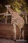 2013_07_27_zoo_zivotinje_zeros_0058.jpg