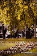 2013_10_18_jesen_u_gradu_zeros_0022.jpg