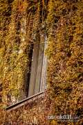 2013_10_18_jesen_u_gradu_zeros_0027.jpg