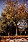 2013_10_18_jesen_u_gradu_zeros_0035.jpg