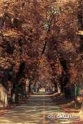2013_10_18_jesen_u_gradu_zeros_0037.jpg