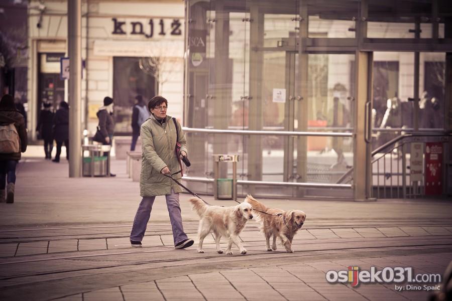 [url=http://www.osijek031.com/osijek.php?topic_id=49452][FOTO] Zimska šetnja sunčanom veljačom [2014.][/url]  Foto: Dino Spaić