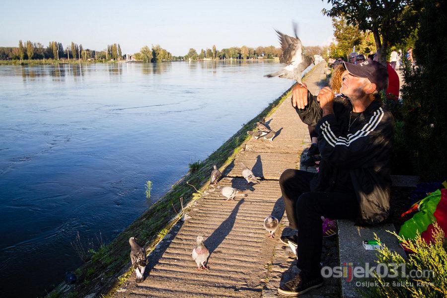 Nabujala Drava se izlila #2 [rujan, 2014.]  [url=http://www.osijek031.com/osijek.php?topic_id=52984][FOTO] Vodostaj Drave kod Osijeka 441 cm, vodeni val ušao na šire podrucje grada[/url]  Ključne riječi: drava poplava