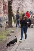 2015_03_29_dan_ulice_ringlova_matije_antuna_reljkovica_teuta_055.jpg