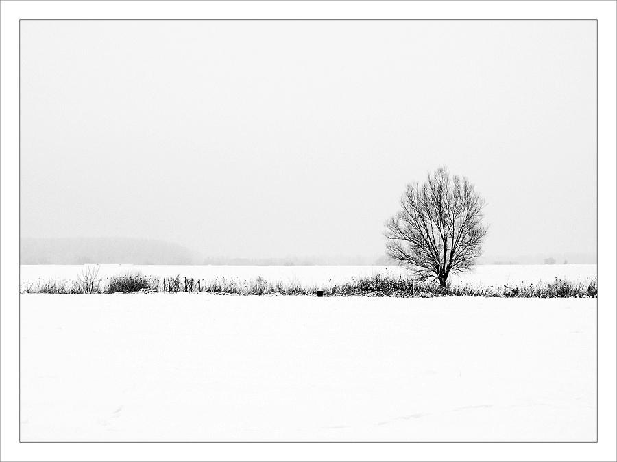 Moje drvo  Foto: Jasmina Gorjanski  Ključne riječi: drvo polje snijeg