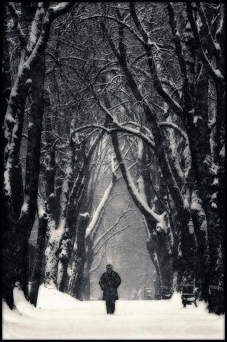 U prolazu  Foto: Samir Kurtagić  Ključne riječi: prolazu zima snijeg drvece