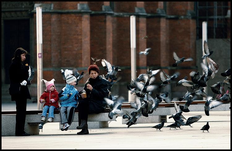 U prolazu  Foto: Samir Kurtagić  Ključne riječi: prolazu trg jesen golubovi