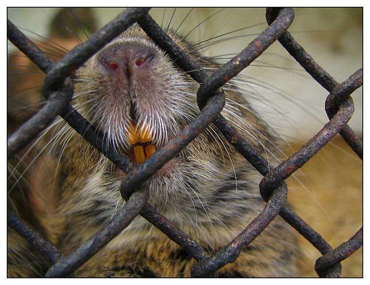 Daj mi kukuruz   Photo: [url=http://www.osijek031.com/profile.php?mode=viewprofile&u=352]kcimer[/url] [url=http://compactmagic.blog385.com]compactmagic blog[/url]  Ključne riječi: osijek zoo