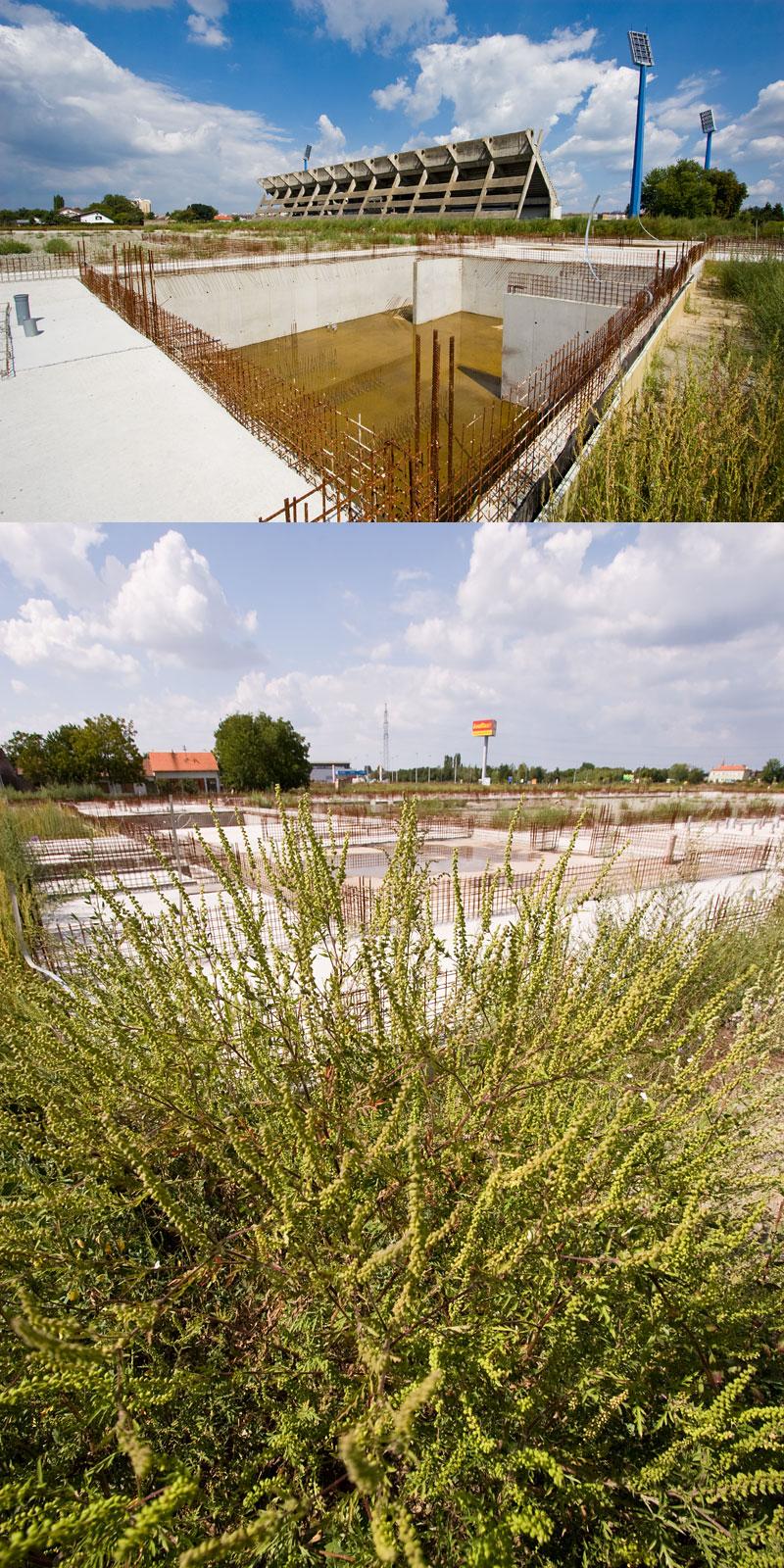 Temelji razdora osječke vlasti  Temelji nesuđene osječke dvorane potopljeni su, zapušteni i obrasli ambrozijom.  Foto: steam  Ključne riječi: dvorana temelji