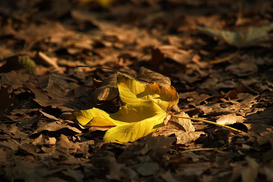 Posljednja zraka sunca  Foto: Jasmina Gorjanski  Ključne riječi: list jasmina
