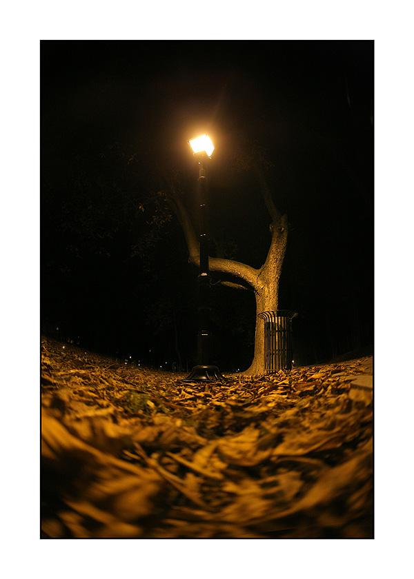 Noć  foto: sikki  Ključne riječi: jesen park lisce nocna noc