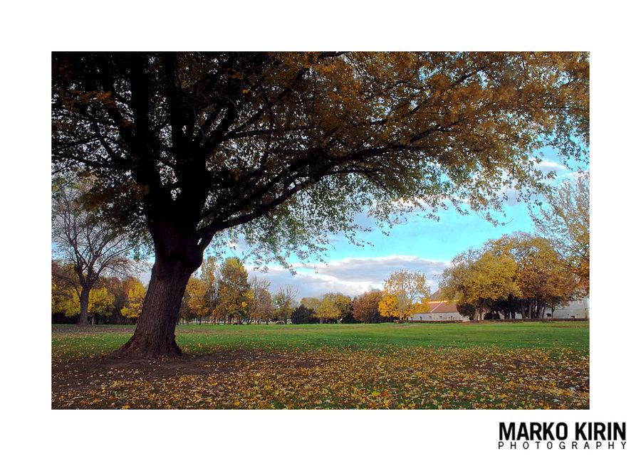 Jesen  Jesen je stigla, šteta je ne iskoristiti žarke boje jeseni.  Foto: Isis  Ključne riječi: jesen drvo