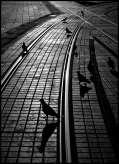 golubovi-malaweb.jpg