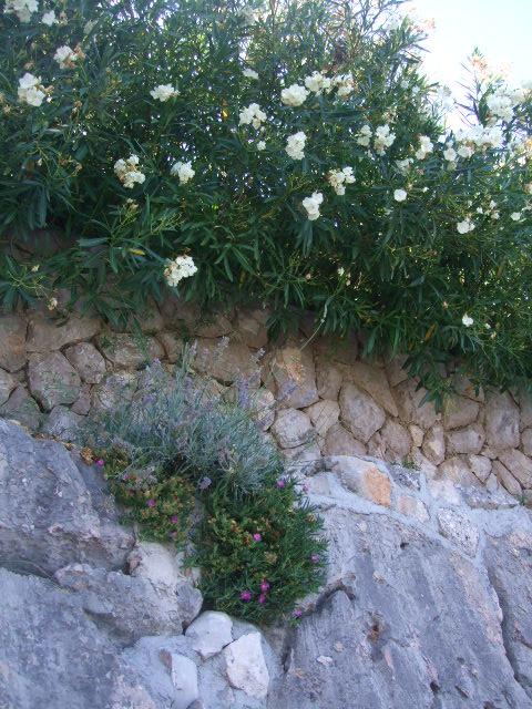 ...cvijeće u kamenu...