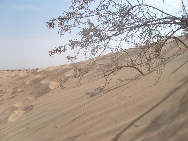 Pustinja 5