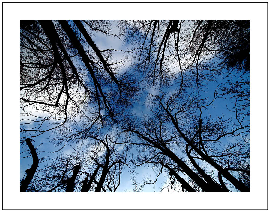 Dodir zimskog neba  Foto: Jasmina Gorjanski  Ključne riječi: zima nebo dodir oblak