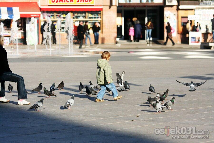 Igra s golubovima  Foto: [b]Daniel Antunović[/b]  Ključne riječi: igra golub golubovi