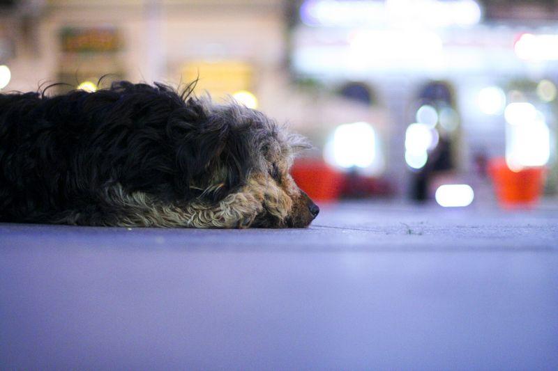 Lonely  Pogledajte i [url=http://www.osijek031.com/galerija/displayimage.php?pos=-15571]Stanovnik trga[/url]  Foto: [b]Daniel Antunović[/b]  Ključne riječi: lonely pas