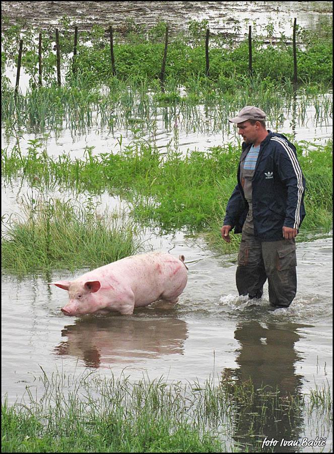 Poplava 2010.  Foto: [b]Ivan Babić[/b]  Ključne riječi: voda poplava