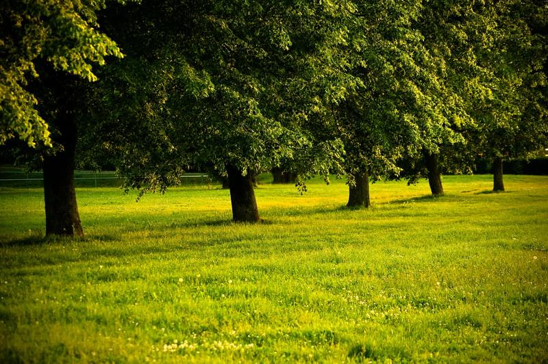 Red i mir  foto: [b]Réka Valkai[/b]  Ključne riječi: drvo zalazak zeleno red mir