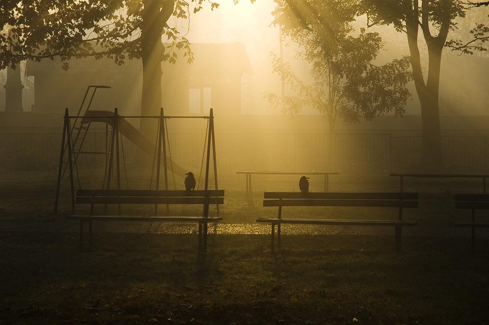 Lurkers  foto: [b]Matej Snopek[/b]  Ključne riječi: jutro zora park