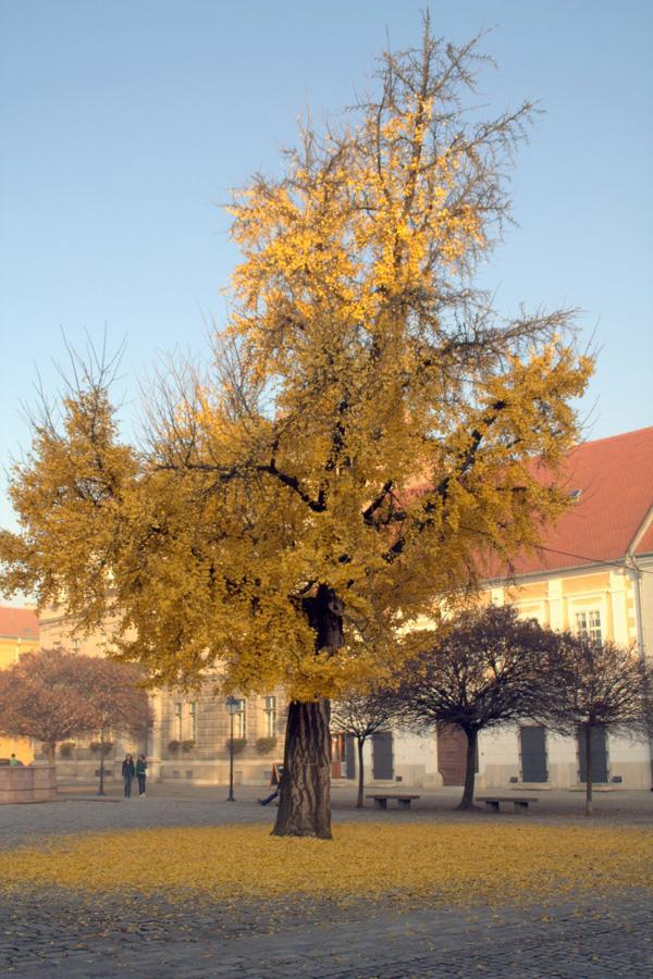 Drvo  Foto: [b]Igor Košćak[/b]  Ključne riječi: drvo tvrdja