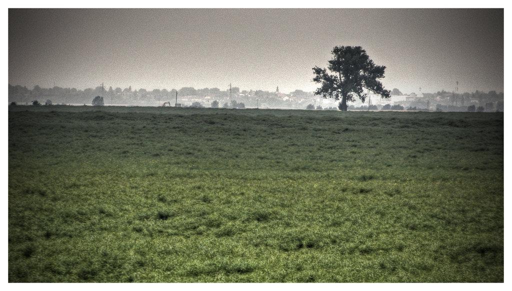 Baranjske ravni  Foto: [b]Domagoj Sajter[/b]  Ključne riječi: baranja ravnica drvo