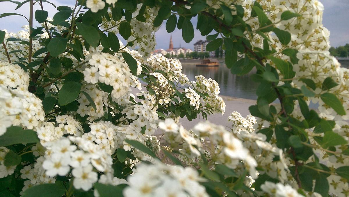 Grad u cvijeću  Foto: Biljana Topolovec  Ključne riječi: Cvijece Proljece Grad Priroda