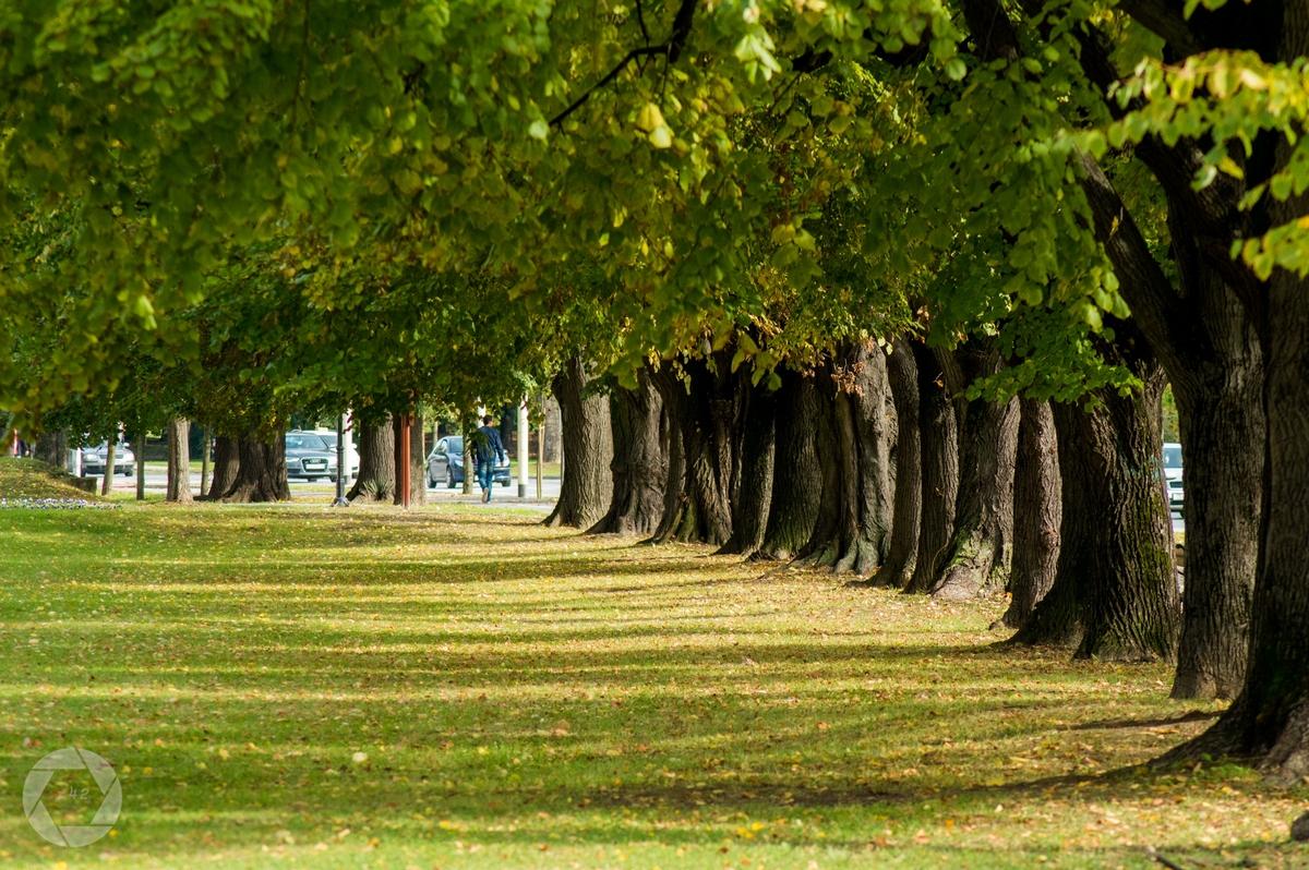 Ljeto vs jesen  Foto: Vedran Ristić  Ključne riječi: Jesen Ljeto Lisce Priroda Drvece