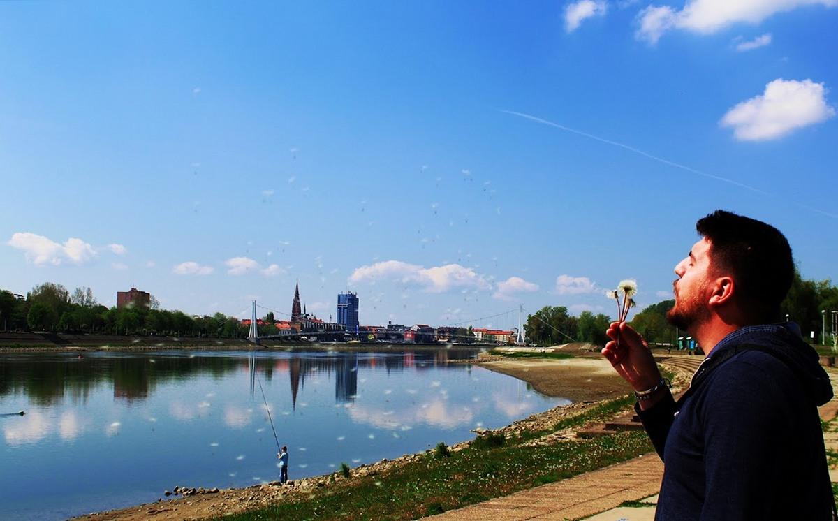 Maslačak odlazi  Foto: Anja Visinger  Ključne riječi: Maslacak Cvijet Drava Priroda