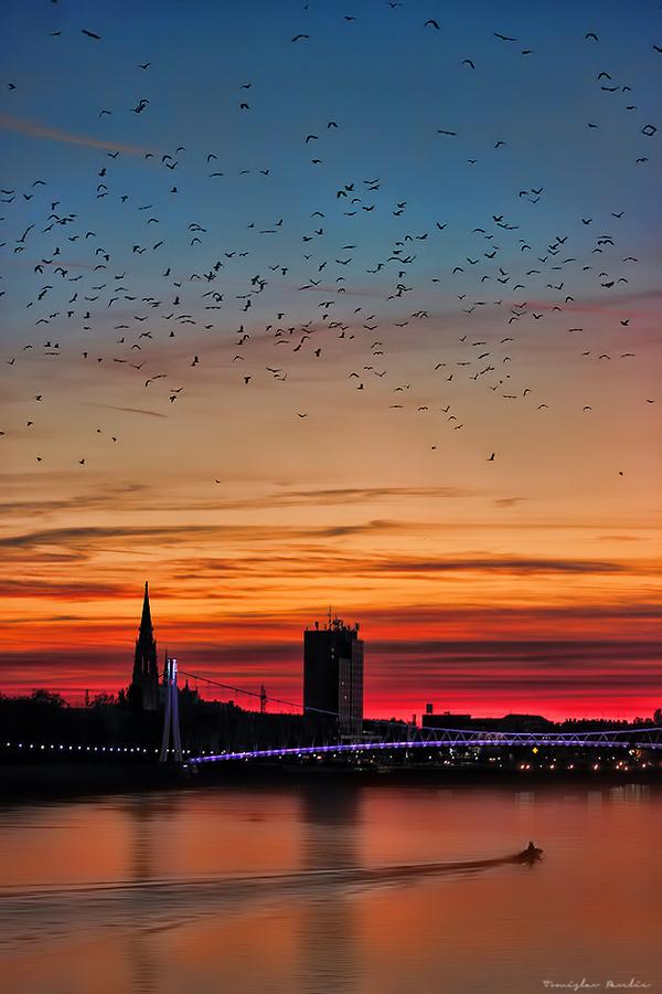 Ptice  Foto: Tomislav Pavelić  Ključne riječi: Priroda Ptice Drava Zalazak