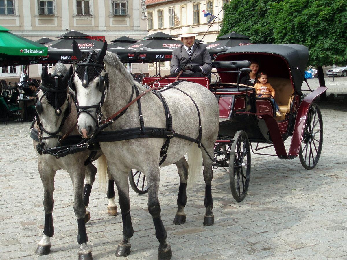 Konji u Tvrđi  Foto: Ladislav Šimko  Ključne riječi: Zivotinje Tvrda Kocija