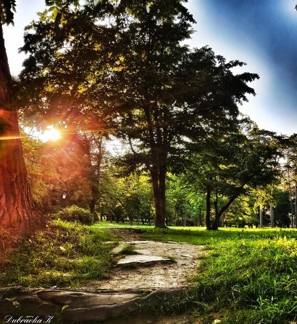 Ljeto je..  Foto: Dubravka Krmpota  Ključne riječi: Put Priroda Sunce Zelenilo