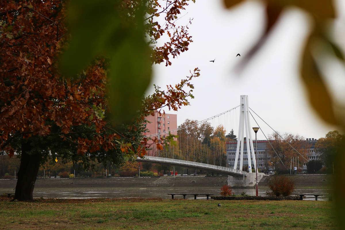Kroz granje  Foto: Danijel Živković  Ključne riječi: Most Drava Suma Priroda