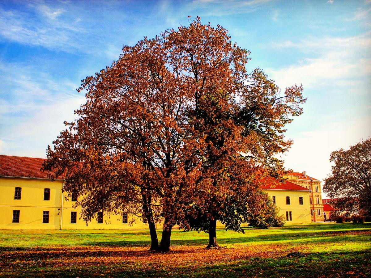 Jesen u gradu  Foto: Hrvoje Rikert  Ključne riječi: Tvrda Drvo Jesen Priroda