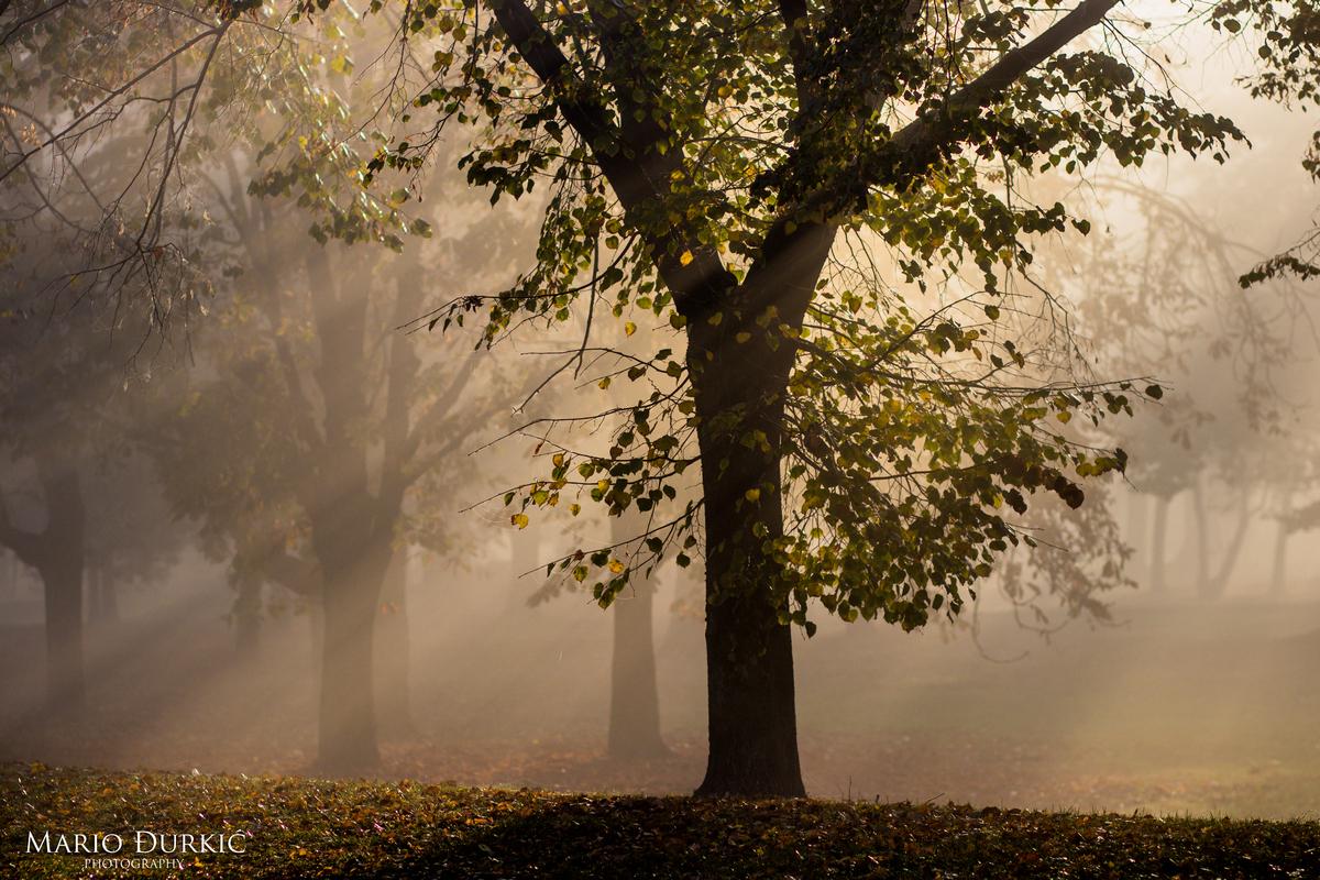 Kroz drveće  Foto: Mario Đurkić  Ključne riječi: Drvece Sunce Priroda