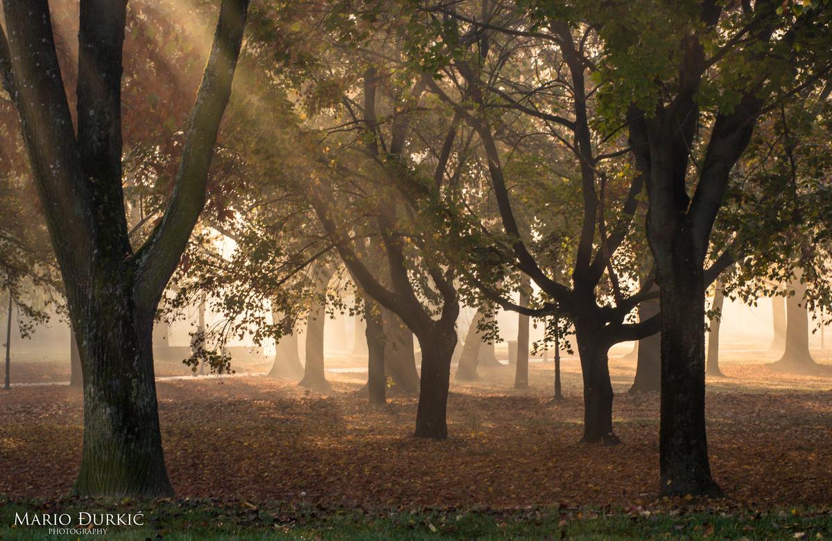 Jesenska fotografija  Foto: Mario Đurkić  Ključne riječi: Jesen Priroda Suma