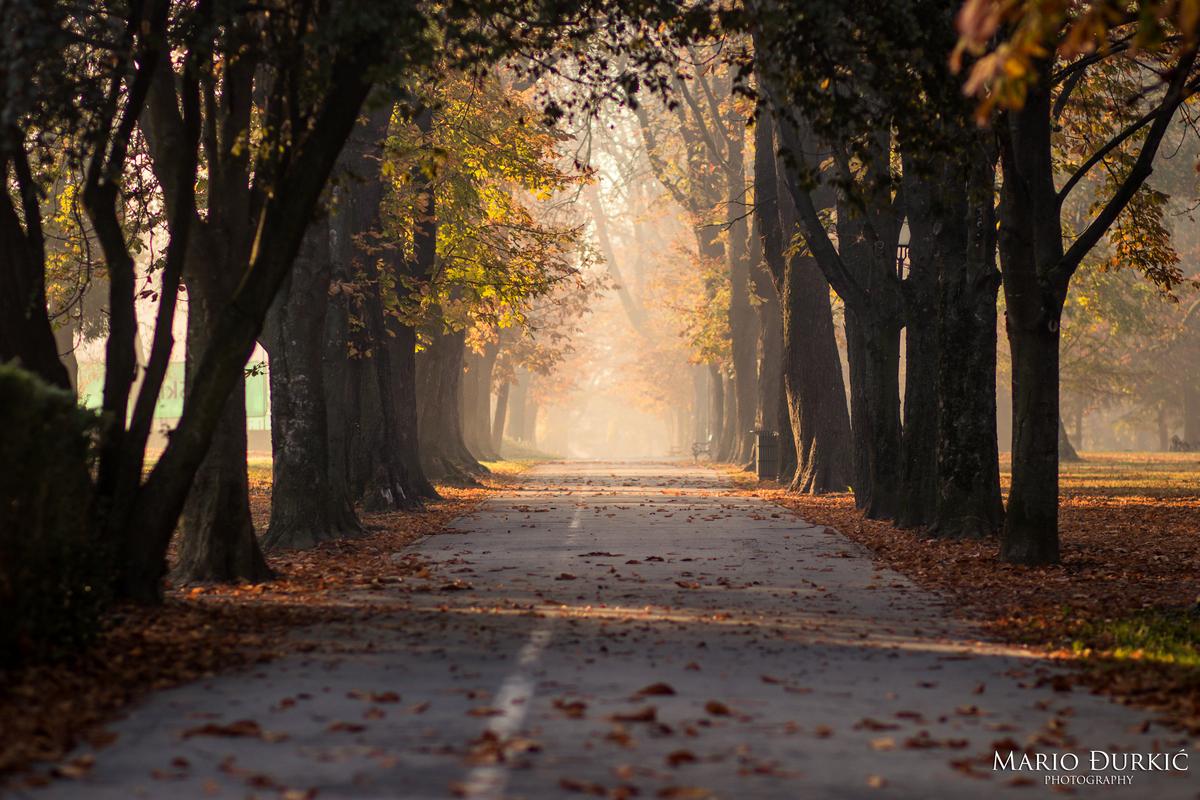 Osječka jesen  Foto: Mario Đurkić  Ključne riječi: Lisce Jesen Magla Drvece Priroda