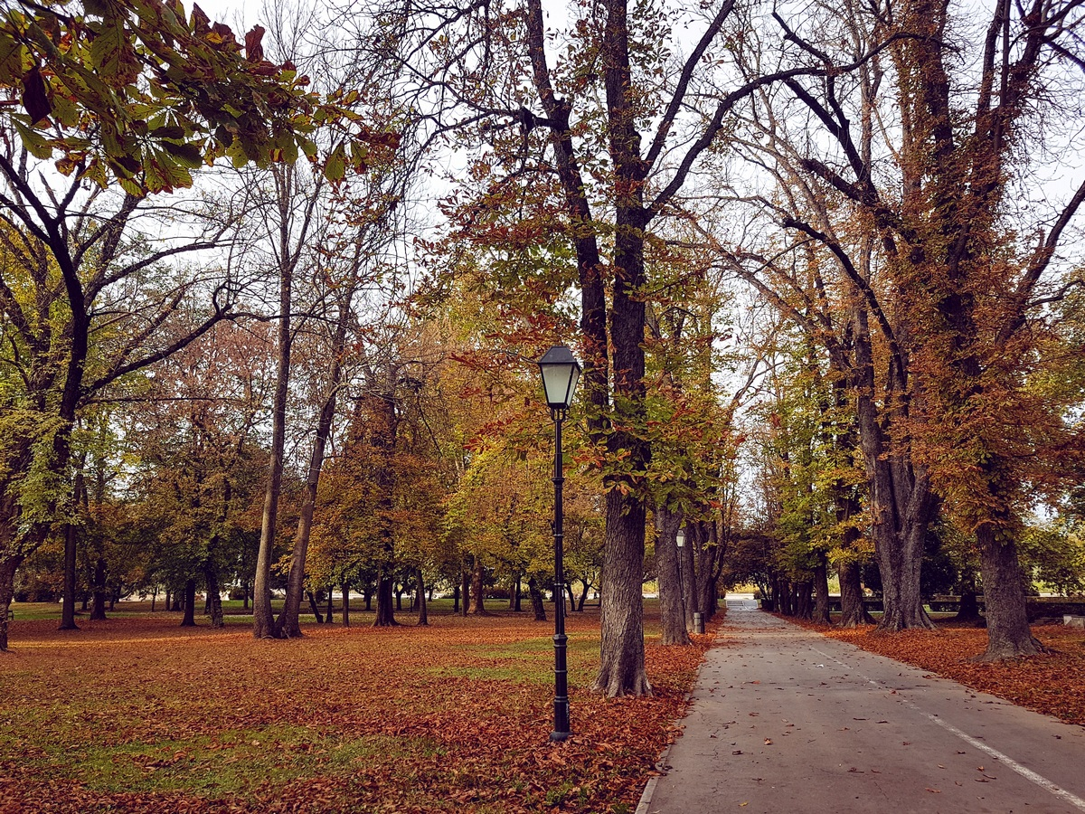 Jesen samo što nije došla  Foto: Iva Pandurić  Ključne riječi: Jesen Lisce Park Priroda
