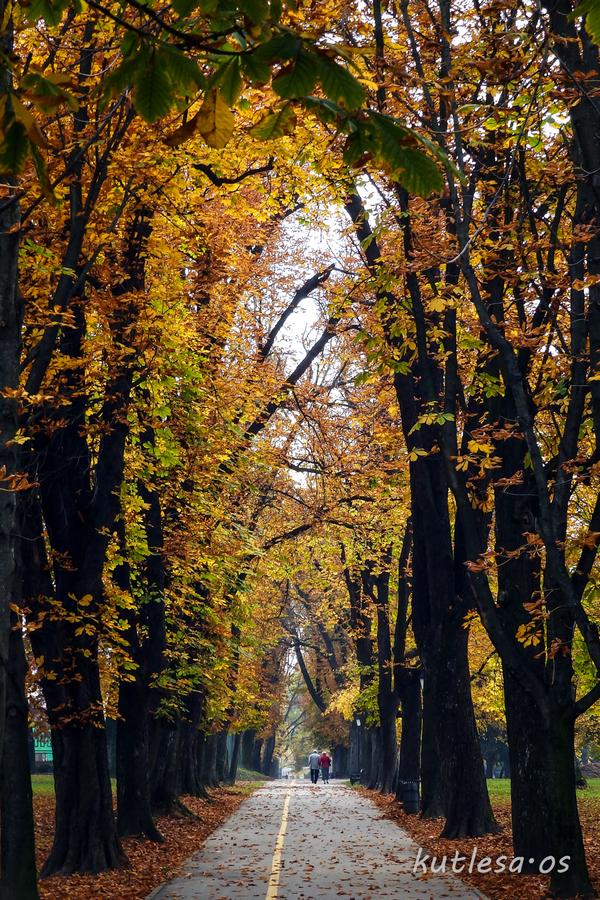 Kroz jesen  Foto: Damir Kutleša  Ključne riječi: Jesen Priroda Lisce Drvece