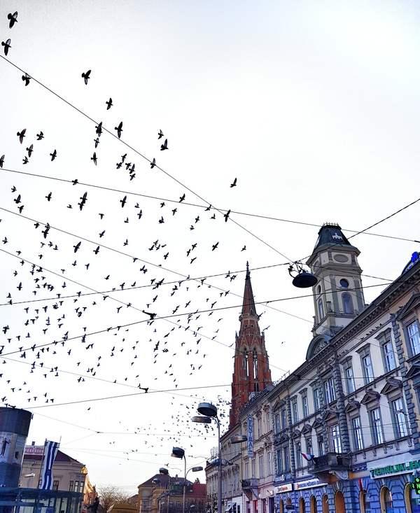 Ptice  Foto: Bruno Colić  Ključne riječi: Ptice Grad