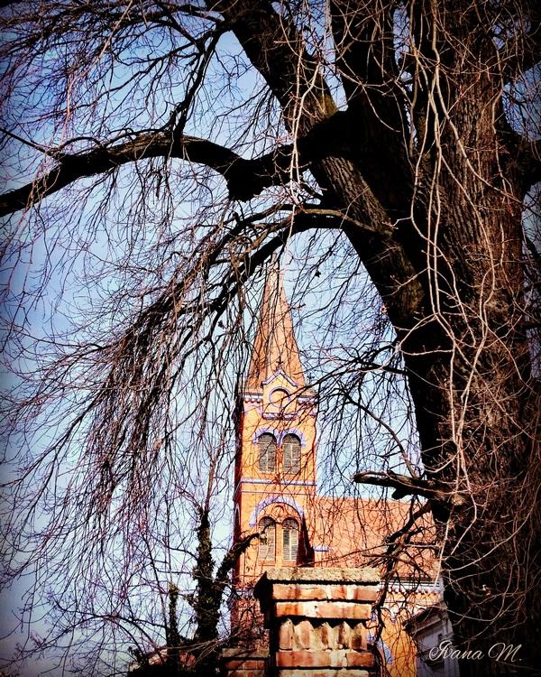 Kroz granje  Foto: Ivana Modrić  Ključne riječi: Drvo Priroda Crkva