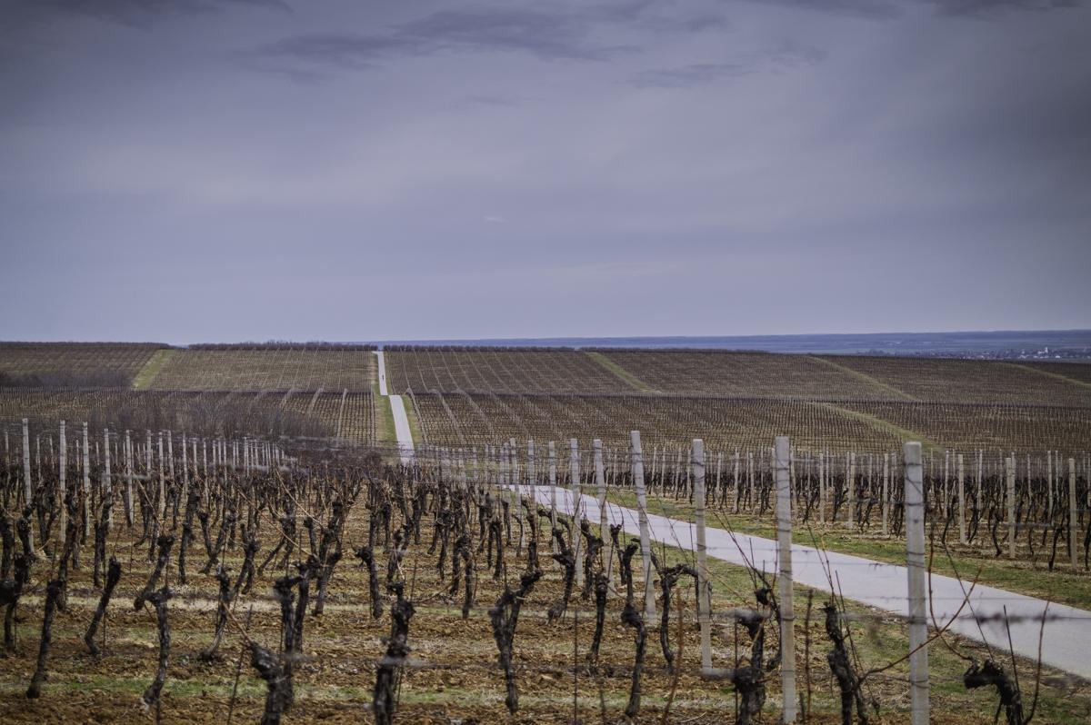 Vinograd  Foto: Andrea Perković  Ključne riječi: Vinograd Slavonija Jesen