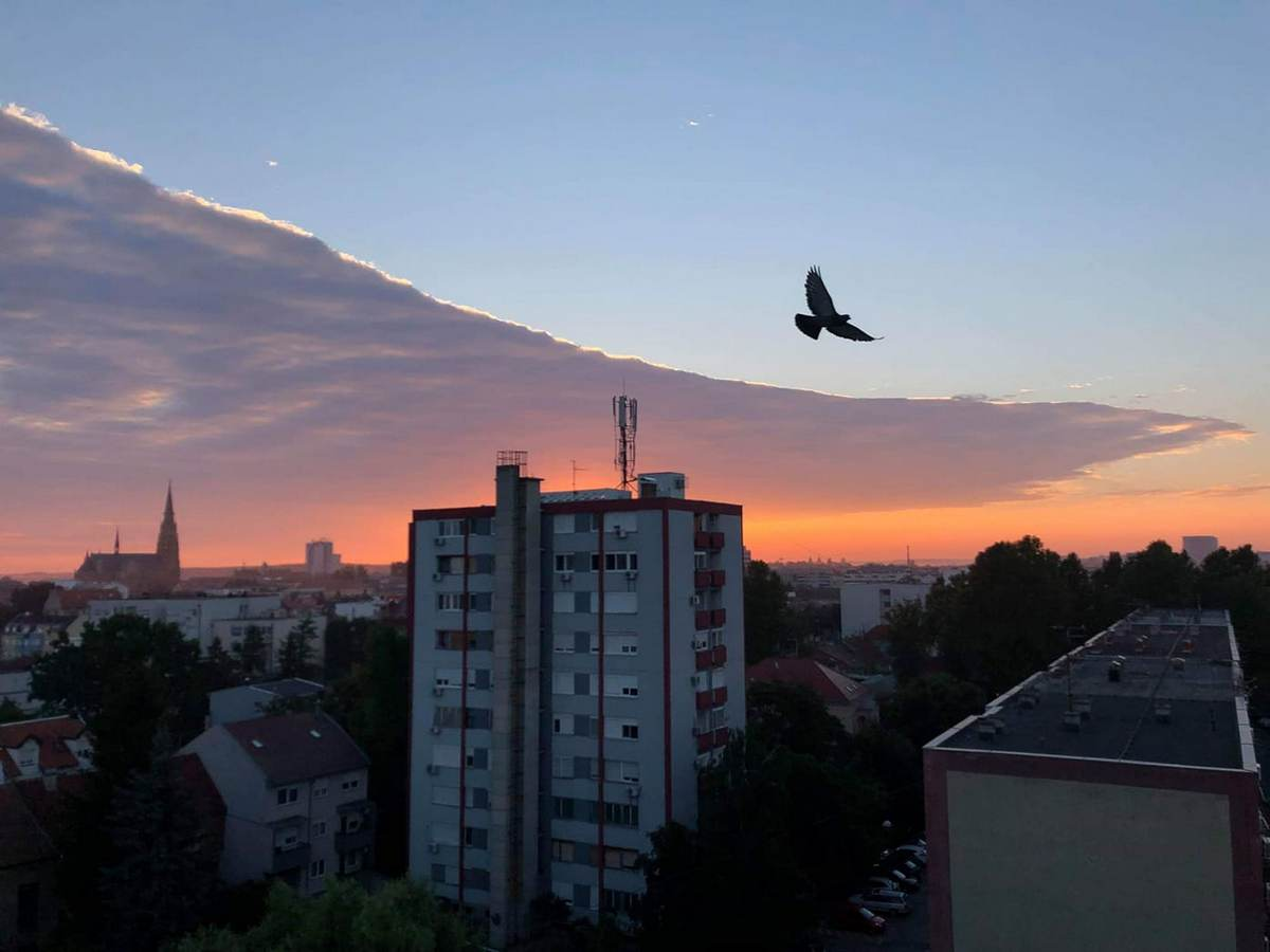 U letu  Foto: Izabela Kolar  Ključne riječi: Ptica Priroda Zgrade Oblaci Nebo