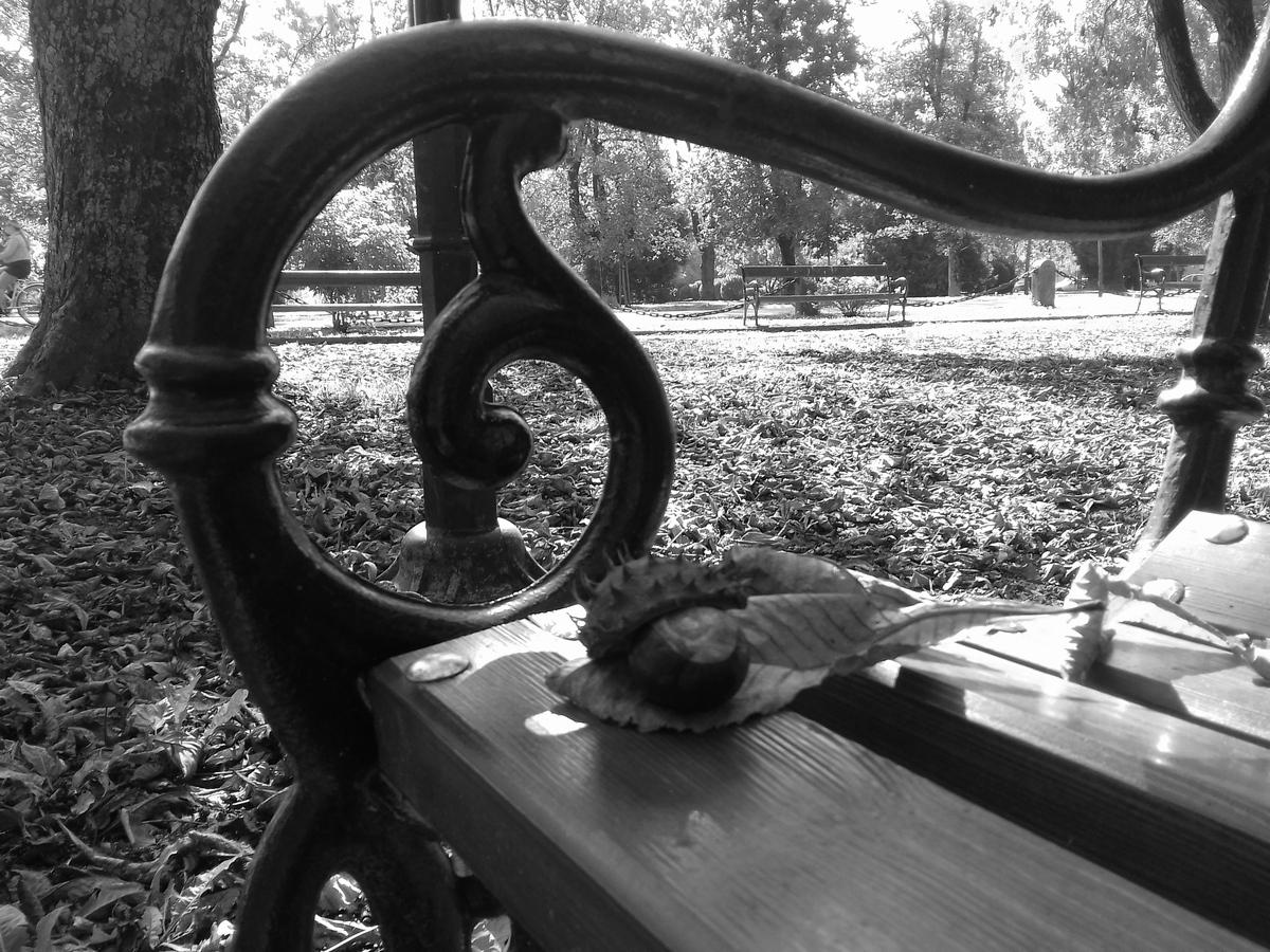 Jesen u gradu  Foto: Dejana Mikulić  Ključne riječi: Jesen Park Priroda