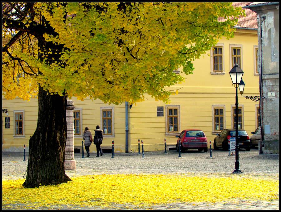Jesen u Tvrđi  Foto: Jelena Kasabašić  Ključne riječi: jesen tvrda lisce zuto