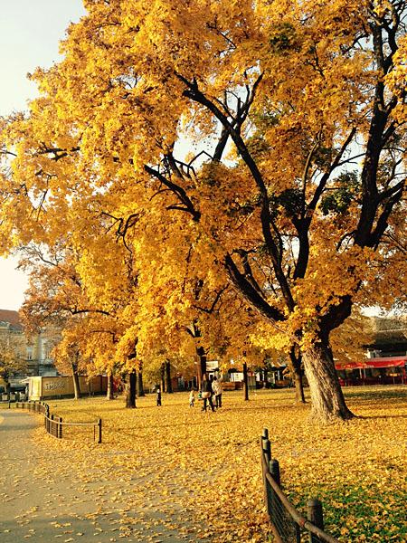 Žuta jesen  Foto: Andrea Štajduhar  Ključne riječi: zuto grad polje jesen