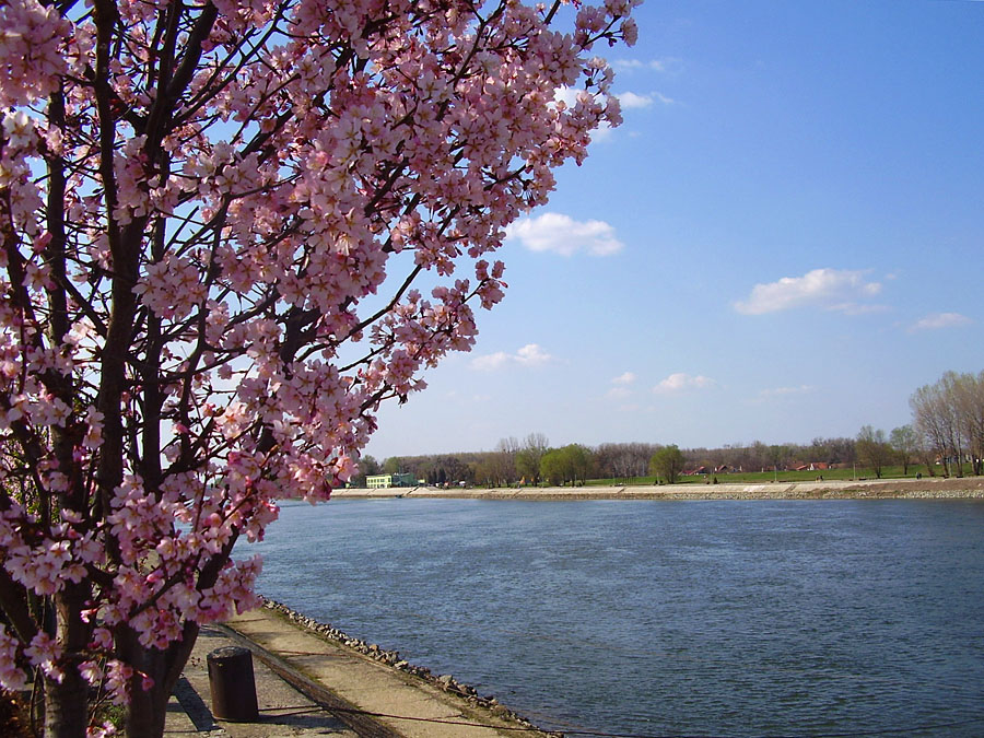 Kad će proljeće?  Foto: Lidija Kuna  Ključne riječi: proljece drava cvijece