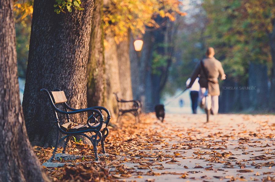 Jesen u parku  Foto: Tomislav Safundžić  Ključne riječi: jesen park lisce setnja pas